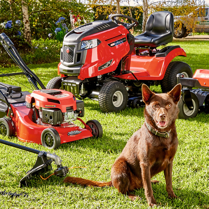 picture of dog and mower